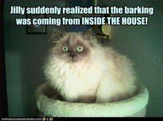 Cat- a strophe !!