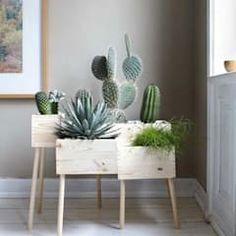 Viviendo verde minimalist living room | homify Cactus House Plants, House Plants Decor, Plant Decor, Cactus Cactus, Cactus Decor, Cactus Planta, Best Indoor Plants, Indoor Cactus, Pot Plante