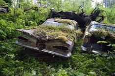 Abandoned autos | Forest Burial Place for Abandoned Cars (30 pics)