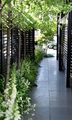 gartendesign ideen Designed by MG Gardens - Rosanna St. Photo by designer Back Gardens, Outdoor Gardens, Narrow Garden, Australian Garden, Garden Landscape Design, Foyers, Garden Inspiration, Backyard Landscaping, Land Scape