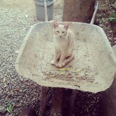 gato hermoso