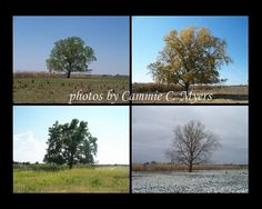 Seasons of a Tree set by OklahomaRain on Etsy