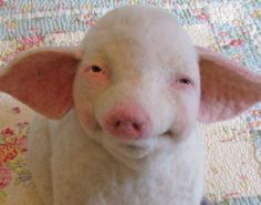 Jeffery the Pig by   Stacy Polson