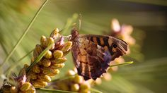 Papillon by Maxime Raynal on 500px