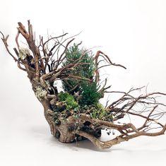 オオヤマネコ|Lynx|ジオラマアレンジのやり方・方法【 #lynx #diorama #succulents #plants #plantstyling #greenplants #terrarium #多肉植物 #寄せ植え #観葉植物 #ガーデニング 】