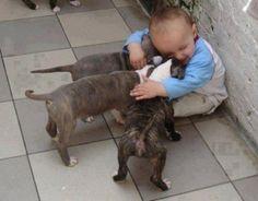 Crianças e animais de estimação (13)
