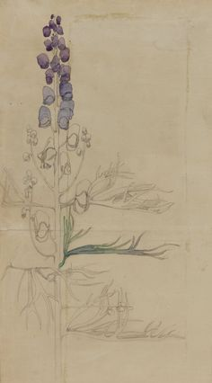 Floral Illustration by Charles Rennie Mackintosh Charles Rennie Mackintosh, Art Nouveau, Art And Illustration, Illustrations, Botanical Drawings, Botanical Prints, Museum Art Gallery, Glasgow School Of Art, Art Graphique