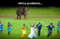 @Laura Weyrich Whew, good thing wild animals didn't disturb your wedding.  That would have been crazy!