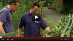 Thrive, charity using gardening and horticulture to change the lives of disabled people