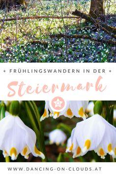 Wandern im Frühling -eine der schönsten Blumenwanderungen in Österreich: der Schneeglöckchenwald! Mit Fototipps  für wunderschöne Blumenfotos - Blumenfotigraphie Clouds, Photo Tips, Snow, Hiking, Woodland Forest, Destinations, Viajes, Nice Asses, Cloud