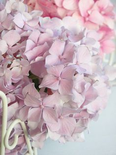 Blue Hortensia: Romantic hydrangeas ...