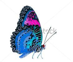 Borboleta Linda Rosa E Azul, Isolada No Fundo Branco bancos de ...