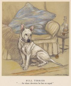 English Bull Terrier by Vernon Stokes, antique print 1940s