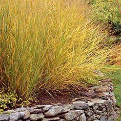 Top 10 Plants for Coastal Gardens | Ornamental Grasses | CoastalLiving.com