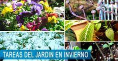 Tareas del Jardin en Invierno para los dos hemisferios - https://jardineriaplantasyflores.com/tareas-del-jardin-en-invierno-para-sur-norte/