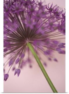 Doug Chinnery Poster Print Wall Art Print entitled Purple Haze 5, None