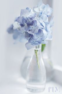 barely there blue. Fresh Flowers, Blue Flowers, Beautiful Flowers, Color Celeste, Light Blue Aesthetic, Bleu Pastel, Blue Hydrangea, Hydrangeas, Deco Floral