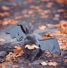 Rabbit in bat Halloween costume I would call him Bunnicula JC Animals And Pets, Baby Animals, Funny Animals, Cute Animals, Rabbit Costume, Bunny Costume, Cute Baby Bunnies, Funny Bunnies, Diy Pour Chien