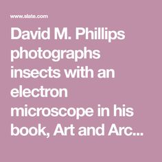 David M. Phillips photographs insects with an electron microscope in his book, Art and Architecture of Insects.