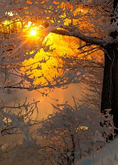 There was a heavy frost … by Vladimir Mironov on 500px.com
