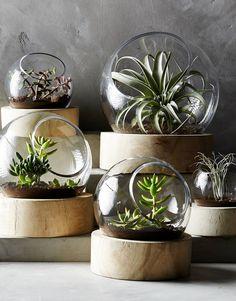 decoracao-como-fazer-terrario-cactos-suculentas-studio-lab-decor (1)