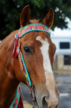 Our Lady Headstall and Breast Collar w/ Fringe by Rodeo Quincy.