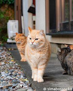 Cute Funny Animals, Cats, Gatos, Cat, Kitty, Kitty Cats