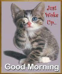 Good Morning Cat, Good Morning Picture, Morning Pictures, Morning Humor, Good Morning Wishes, Morning Pics, Funny Morning, Good Morning Sister Quotes, Good Morning Animals