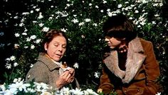 'Harold and Maude' (1971) by Hal Ashby