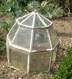 Garden Cloche