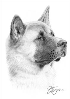 JAPANESE AKITA Art Pencil Drawing Print A4 signed by artist #Realism