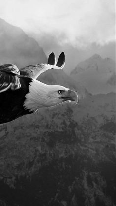 Like and share! Cats Wallpaper, Eagle Wallpaper, Animal Wallpaper, Nature Animals, Animals And Pets, Cute Animals, Eagle Pictures, Animal Pictures, All Birds