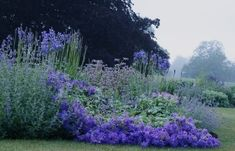 The Blue Garden at Narborough Hall - photo © David Hennessy Purple Garden, Love Garden, Dream Garden, Lawn And Garden, Beautiful Landscapes, Beautiful Gardens, Blue And Purple Flowers, Lavender Blue, Splendour In The Grass