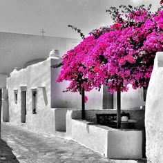 Bougainvillea and whitewashed houses, Sifnos, Greece Island Villa, Paros Island, Island Beach, Greek Isles, Greece Travel, Mykonos, Places To See, Beautiful Places, Around The Worlds