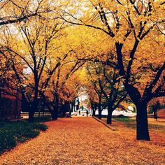 This gorgeous autumn image was captured by Instagrammer ravyna27 at the Australian National University