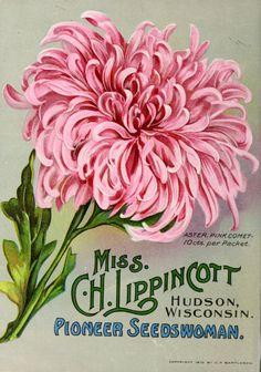 1911 - Lippincott flower seeds. - Biodiversity Heritage Library