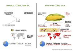 Ako sa za 10 000 rokov zmenili broskyne, melóny a kukurica… http://bit.ly/1upWwss