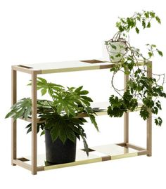 The Botanic Shelf | Adea
