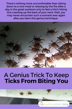 Brilliant! This will solve your tick problem using something you probably already have. #ticks #diy