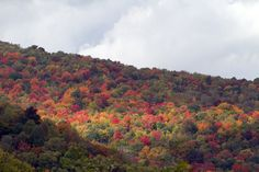 Just beautiful! Fall in the Smoky Mountains