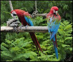 Colores (vero_c_t) Tags: animales temaiken papagayos