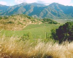 """Geradezu eingekreist sind die noch nicht mit Reben bepflanzten Hügel bei Tres Palacios/Chile. Die Zivilisation des Weinberges hat bereits die Ausläufer erreicht: Wein für die Welt"""" www.cwc.de"""