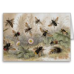 Old Lithograph Prints | Bee Antique Lithograph print card