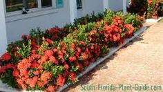 Get tips for loving a stunning Florida Gardening, surroundings, or yard. Our specialists let you know everything necessary to Florida Gardening Inspiration Florida Landscaping, Florida Gardening, Landscaping With Rocks, Landscaping Plants, Front Yard Landscaping, Front Walkway, Tropical Landscaping, Landscaping Ideas, Front Porch