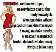 Hilarious, Funny, Haha, Motto, Therapy, Text Posts, Polish Sayings, Funny Pics, Jokes