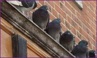 Do #Bird Nesting have any influence on your #Business? http://bit.ly/1N4vaQF