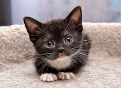 And the cutest kitten of the day is…….