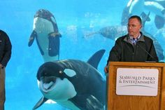 Adapted from Death at SeaWorld, Shamu and the Dark Side of Killer Whales in Captivity —David Kirby (St. Martin's Press, 2012) Each year, millions of people pay top dollar to visit SeaWorld and other captive orca entertainment parks. But they only witness the glitzy, shiny, happy side of Shamu: the …