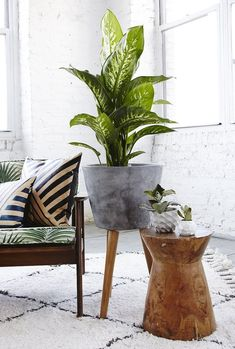 Expect to see concrete furniture, accessories, + tile in the new year!