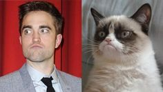 Edward vs. Grumpy Cat